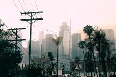 llaa (floffimedia) Tags: losangeles la california kalifornien stadt city doppelbelichtung doubleexposure strommasten skyline abendrot morgenrot sonnenaufgang sonnenuntergang sunrise sunset smog palm trees palmen palms wolkenkratzer skyscrapers transmissiontowers palmtrees