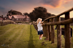 ... meet me at the sunset ... (Margarita K...) Tags: southwales south wales beautifulwales margam country park landscape child childhood fairytales girl portrait farm sheep sunset goldenhour ngc nikon d5200 mkphotography margaritakphotography