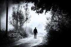 Walk Into The Unknown (Fredrik Lindedal) Tags: mist misty smoke blackandwhite bw walk path trees nikon road monochrome tree outdoor fredriklindedal