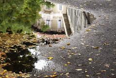 (gabubumon.) Tags: pozzanghera pioggia autunno fall autumn foglie leaves