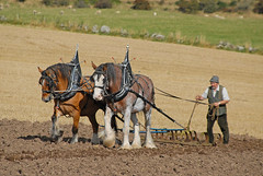 Harrowing -  Working Horses Day 2016 (john_mullin) Tags: scotland scottish british horse hoses workinghorses heavyhorses clydesdale farm farming agriculture indaysgoneby horsepower teamwork animals cultivation harvest ploughing britishhorsesociety collessie fife