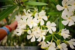 PLW_5532 (Laszlo Perger) Tags: wien vienna sterreich austria blumengarten hirschstetten flowergarden