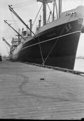 """Ship """"Patonga"""", 17 July 1957 (State Library of New South Wales collection) Tags: statelibraryofnewsouthwales"""