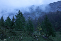 .-/ Highlight /-. (samuel.devantery) Tags: highlight fog forest foggy formation follow trees tree wood green red switzerland swiss suisse valais valaiswallis valley zeuzier