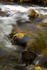 McGee Creek Pack Station-17 (sourdoughspud) Tags: 2016fallcolors bigsur california inyocounty mcgee ocean packstation pointlobos stream blurredwater eastside orangeflower sierra
