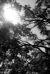 bois 3 (photoRSV) Tags: bw nb forillon gaspesie woods