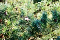 _MG_2987 (hjimmy schlter) Tags: dwirzyno wojewdztwozachodniopomorskie polen pl urlaub polen2016 ffentlich