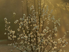 Morning has broken Golden (gailpiland) Tags: sun landscape golden photo soe autofocus magiclight thegalaxy sooc theperfectphotographer thebestofday awesomeblossoms nikonflickraward gailpiland ringexcellence rememberthatmomentlevel1 rememberthatmomentl1