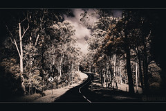 Clear Mountain Road (nighstar) Tags: trees bw color dark landscape ir blackwhite australia olympus panasonic queensland infrared vignette cloudscape 85a 1428 m43 14mm clearmountain carwindowshots epl1
