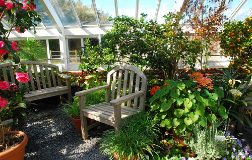 Seat in the greenhouse