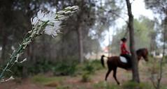 CERCA Y LEJOS (Buscavientos) Tags: valencia caballo flor paseo bosque gamon comunidadvalenciana lalall