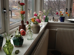My mothers small vases and bottles that followed me through my whole life..<3 (Yvonne van Velzen) Tags: flower colour blomst windowpane vases ranunkel vinduskarm vaser