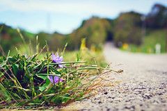 Weeds on The Road (Images by April) Tags: canon weeds pennsylvania country downlow countryroad 550d tamron1755mmf28 t2i