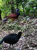 costarica2013_birds01