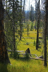 Forest (Erika & Rdiger) Tags: summer usa grass forest hiking yellowstonenationalpark wyoming mysticfalls littlefireholeriver