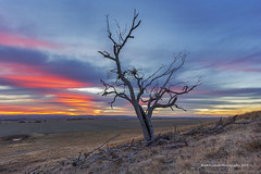 Desolate (Mark Dawson Photography) Tags: tree plains hillside southaustralia clarevalley markdawson
