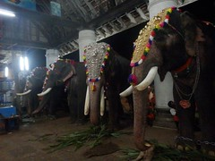 koodalmanikyam utsavam 2013 shiveli24 (koodalmanikyam-utsavam) Tags: elephant utsavam irinjalakuda koodalmanikyam irinjalakudautsavam shiveli koodalmanikyamtemple koodalmanikyamutsavam2013 koodalmanikyamutsavamphotos