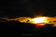 The Sunrise Bird. (birdcloud1) Tags: newzealand birds clouds canon journey birdsinflight dunedin flyingbirds sx10is canonpowershotsx10is amandakeogh amandakeoghphotography birdcloud1