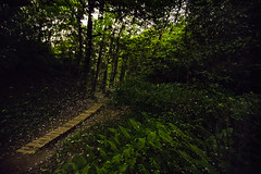 Fireflies light up the Trail  (Sharleen Chao) Tags: longexposure canon taiwan taipei nightscene      lampyridae lightningbugs 1635mm   2013     canoneos5dmarkiii