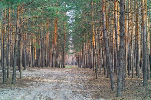 лес ©  lexvoro