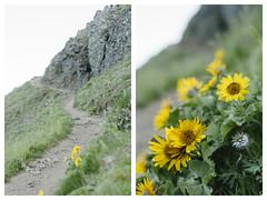 """Dog Mountain Hike Diptych #1"" (peakbagger_trin) Tags: digital 50mm nikon diptych columbiarivergorge dogmountain d90 nikond90"