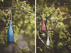 My little solar bottles. (Confused-Hair) Tags: blue red white tree spring bottles twinkle leafs branche