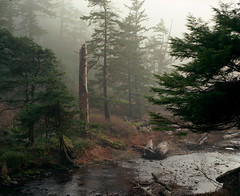 Oswald West (Zeb Andrews) Tags: trees film nature misty oregon analog forest landscape foggy pacificnorthwest oregoncoast 6x7 pacificcoast oswaldweststatepark pentax6x7 shortsandsbeach bluemooncamera