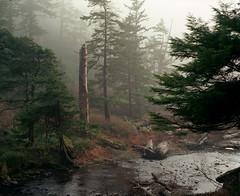 Oswald West (Zeb Andrews) Tags: trees film nature misty oregon analog forest landscape foggy pacificnorthwest oregoncoast 6x7 pacificcoast oswaldweststatepark pentax6x7 shortsandsbeach bluemooncamera
