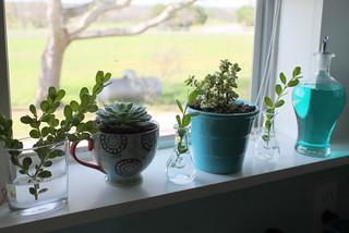 My kitchen window...