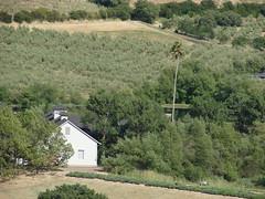 Petaluma Farmland (Dunby PICS) Tags: pictures california ranch trees pics picture olive pic orchard farmland petaluma 2013 wdunby