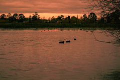 Lake Wendouree Sunset (6tandinh) Tags: sunset ballarat