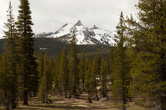 cathedral peak from tuolumne meadows (ohikura) Tags: california ca yosemitenationalpark tuolumnemeadows cathedralpeak tiogaroad glenaulintrail