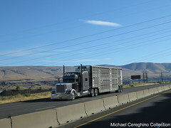 Duarte Trucking Peterbilt 389 (Michael Cereghino (Avsfan118)) Tags: duarte livestock peterbilt pete model 389 bull wagon bullwagon cattle hauler semi truck trucking