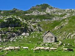 Estive d'Eychelle (Arige) (PierreG_09) Tags: arige pyrnes pirineos couserans montagne eychelle estive cabane refuge troupeau faune brebis mouton