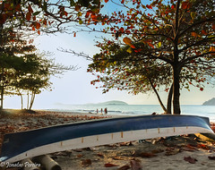A canoa azul (Pereira Jonatas) Tags: canoa azul famlia mar folhas areia rio de janeiro brasil paraty praia beach tree