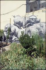 2016 (uno900) Tags: streetartmadrid graffitimadrid arteurbanomadrid graffiti madrid street art arte urbano graffitis españa spain esto es una plaza lavapies estoesunaplaza jabalies rayones rayon jabali rayón jabalí roa