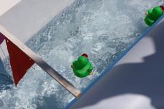 Duck Race-10