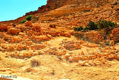 Djerba 2010 150 (Elisabeth Gaj) Tags: djerba2010 elisabethgaj tunisia afryka travel natur nature landscape