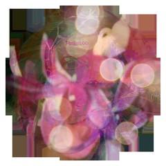 Peekaboo (soniaadammurray - OFF) Tags: digitalphotography manipulated experimental circle abstract flowers bokeh eyes selfportrait humour gerardpifou