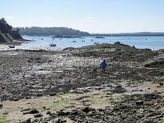 Saint-Malo (Erwin Schoonderwaldt) Tags: bretagne brittany seagrass lowtide