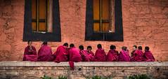 Novice monks (Redust) Tags: labrtngmonastery china xiahe gannan lanzhou tibetan novicemonks red culture budd tibetanbuddhism people children faith