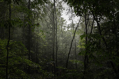 Below the trees (Petr Skora) Tags: les mood nature forest woods tree trees mist atmosphere green czech