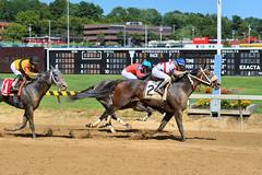 2016-08-28 (29) r5 Jevian Toledo on #2 It's a Bang (JLeeFleenor) Tags: photos photography md maryland statefair horseracing annual racing timonium fatrgrounds jockey   jinete  dokej jocheu  jquei okej kilparatsastaja rennreiter fantino    jokey ngi horses thoroughbreds equine equestrian cheval cavalo cavallo cavall caballo pferd paard perd hevonen hest hestur cal kon konj beygir capall ceffyl cuddy yarraman faras alogo soos kuda uma pfeerd koin    hst     ko
