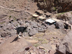 P1120274 (Terezaestkov) Tags: maroko morocco vysokatlas highatlas atlasmountains dabaltubkal jabaltbql jbeltoubkal goat