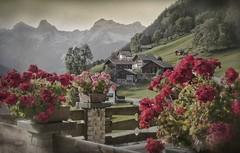 Bschlabs (Werraman) Tags: austria alpen nikon p900 bschlabs sterreich lechtal