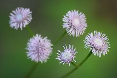 DSC_0168 (Kelson Souza) Tags: flores flor primavera campo silvestre florzinha flowers flower