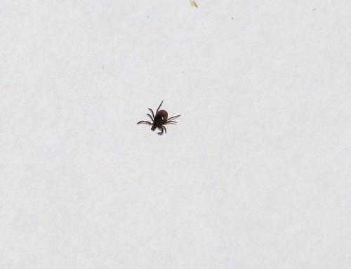 Lots Of Ticks Near My Bed