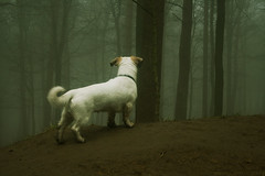 Under Surveillance (raw.tism) Tags: wood trees dog white mist cinema west tree look fog woodland jack russell looking cross surveillance yorkshire shih tzu watching process cinematic otley chevin