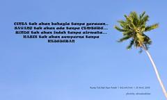 DSC_0209 (ahmadnakhaie85) Tags: panorama nikon palm malaysia kata kelapa pantai tok pokok lanskap pokokkelapa nikond90 tokbali nakhaie katahikmah