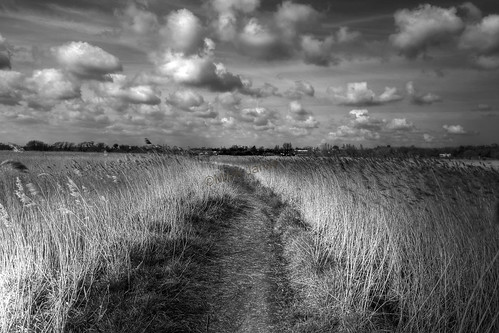 Snape Maltings Reed path